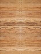 FL-10 Tiger Wood
